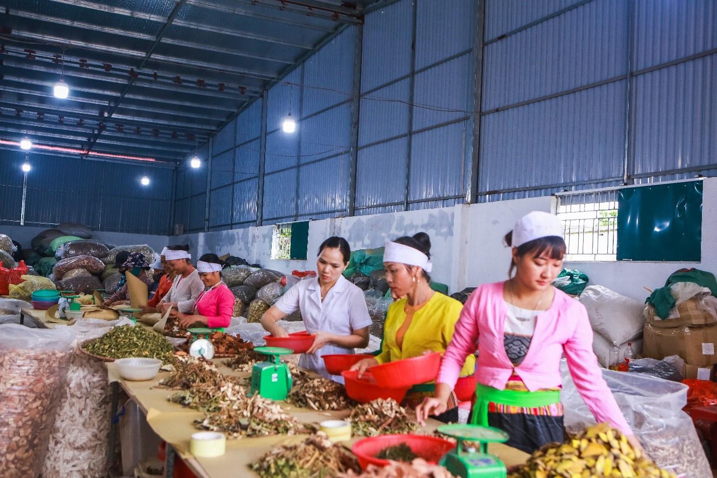 Lương Y Nguyễn Thị Hiền – Kho Báu Thuốc Nam Của Người Việt - 5