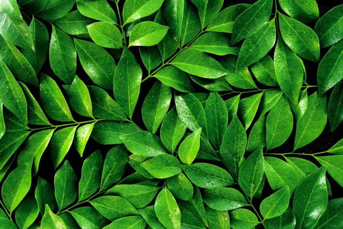 Trong nền văn hóa phương Tây, màu xanh lá cây đại diện cho nhiều điều, chẳng hạn như sự may mắn, tự nhiên, sự tươi mới, môi trường, sự giàu có và sự ghen tỵ.