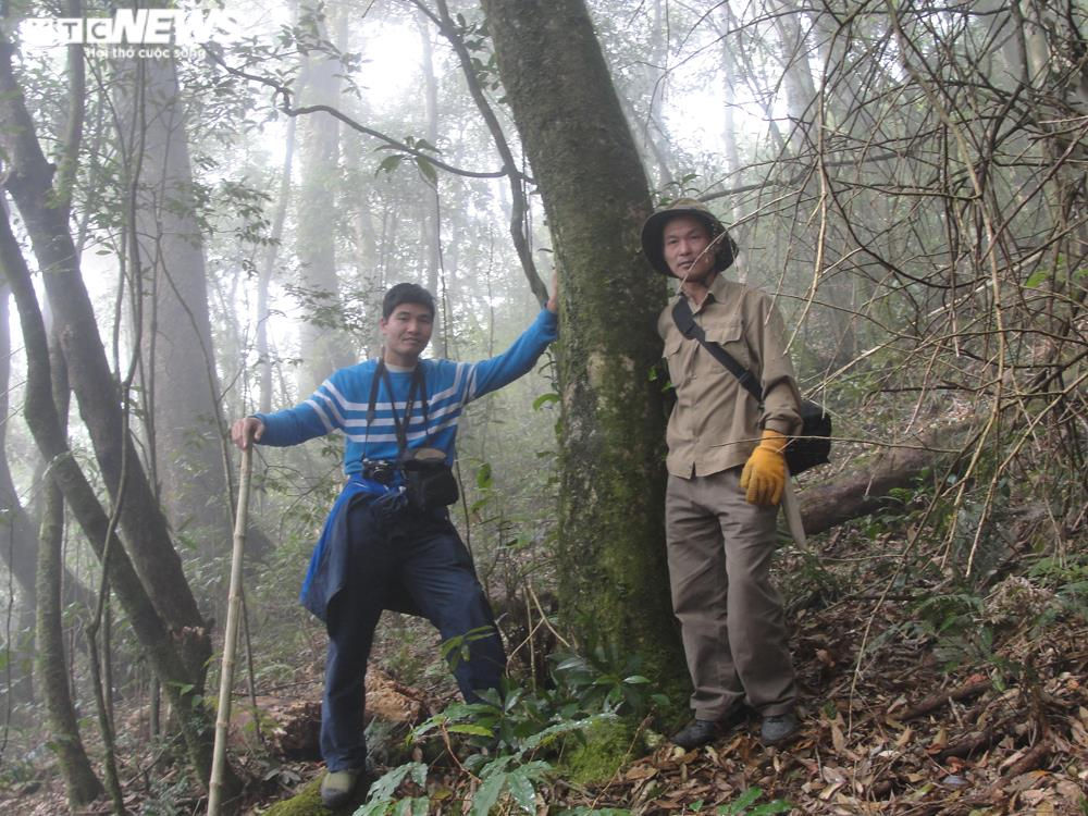 Bí ẩn từ những rừng chè shan tuyết ngàn năm tuổi trên đỉnh Fansipan - 1