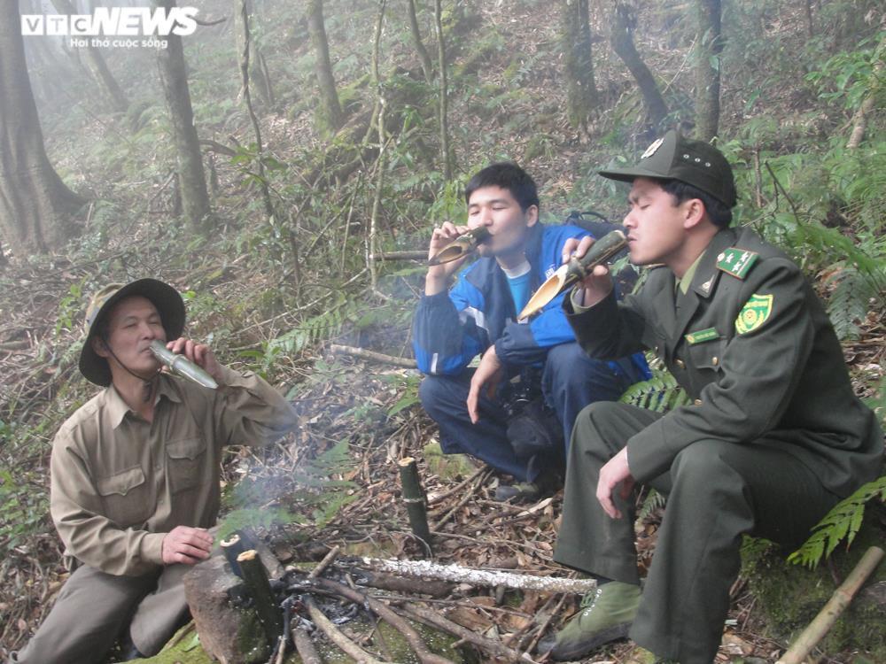 Bí ẩn từ những rừng chè shan tuyết ngàn năm tuổi trên đỉnh Fansipan - 6