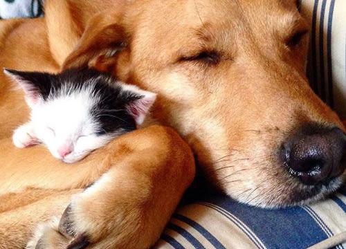"""Tan chảy trước cặp chó - mèo gắn bó với nhau """"như hình với bóng"""""""