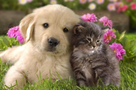 Các mẹo để thú cưng luôn ngoan hiền