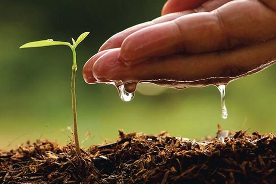 Thiên lý hữu tình: Ươm một mầm cây, đường xanh muôn ngả