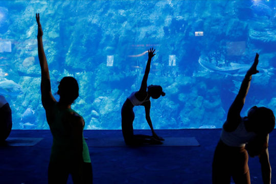 """Cơ hội trải nghiệm lớp học yoga giữa """"lòng đại dương"""" (11/10/2020)"""