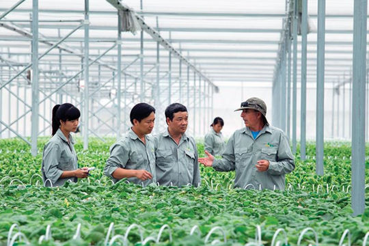 Vai trò của HTX trong chuỗi liên kết chế biến nông sản xuất khẩu (16/10/2020)