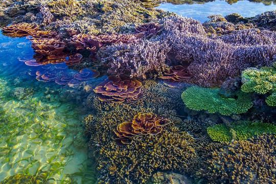 Phát triển du lịch gắn với bảo vệ tài nguyên biển (17/10/2020)