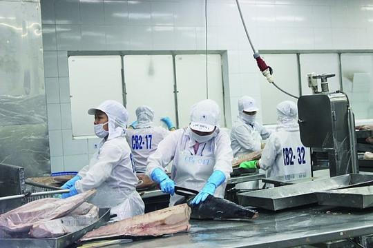 EVFTA tạo nhiều cơ hội cho cá ngừ đi Châu Âu