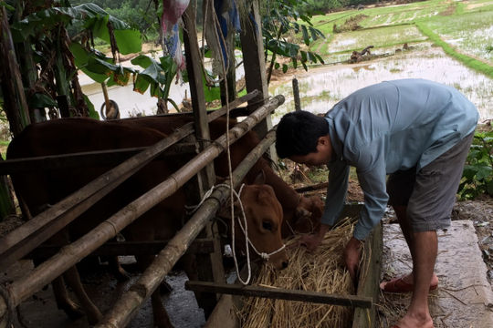 Người dân miền núi Quảng Nam chống rét cho gia súc, gia cầm
