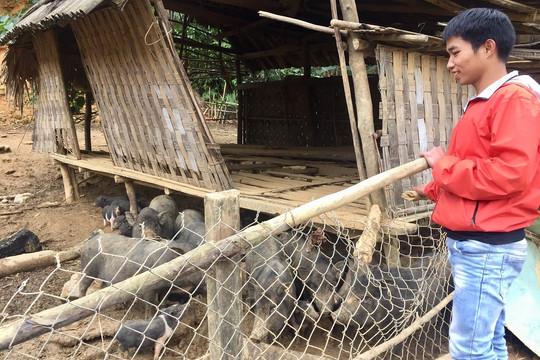 Thanh niên Quảng Nam về quê khởi nghiệp thành công