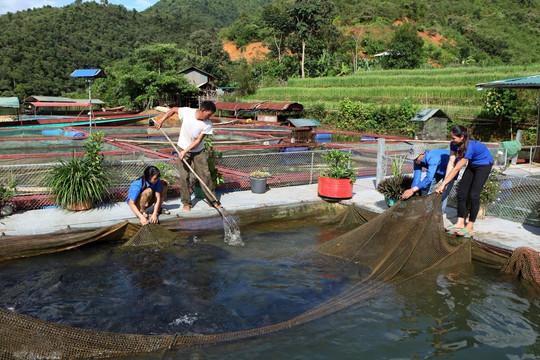 Thanh niên Lai Châu khởi nghiệp từ mô hình hợp tác xã