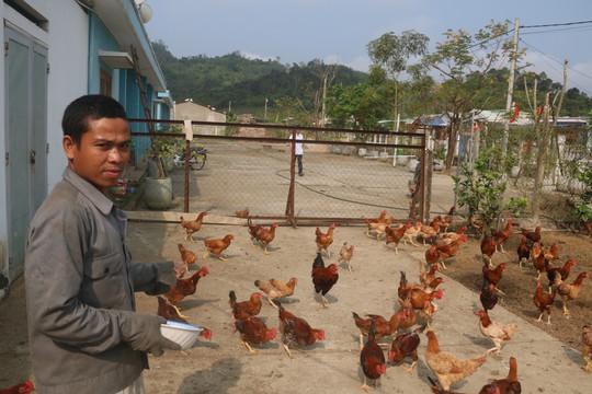 Thanh niên Quảng Nam làm giàu từ vùng đất hoang sơ, cây cối mọc um tùm