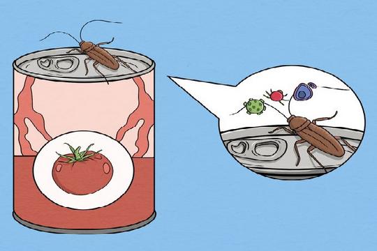 Coi chừng 'nếm' nước thải chuột, côn trùng khi dùng đồ hộp