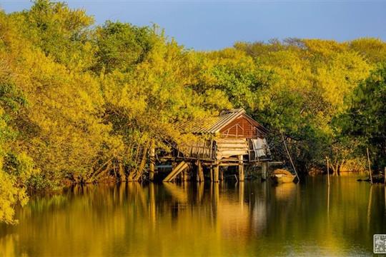 Một cánh rừng rất 'tình và thơ ở Huế' có thể làm bạn 'quên lối về'